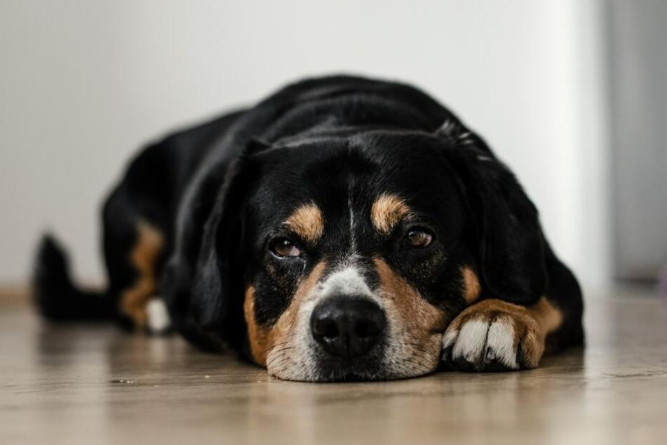 Hunde können mit zu viel Quasselei nichts anfangen.