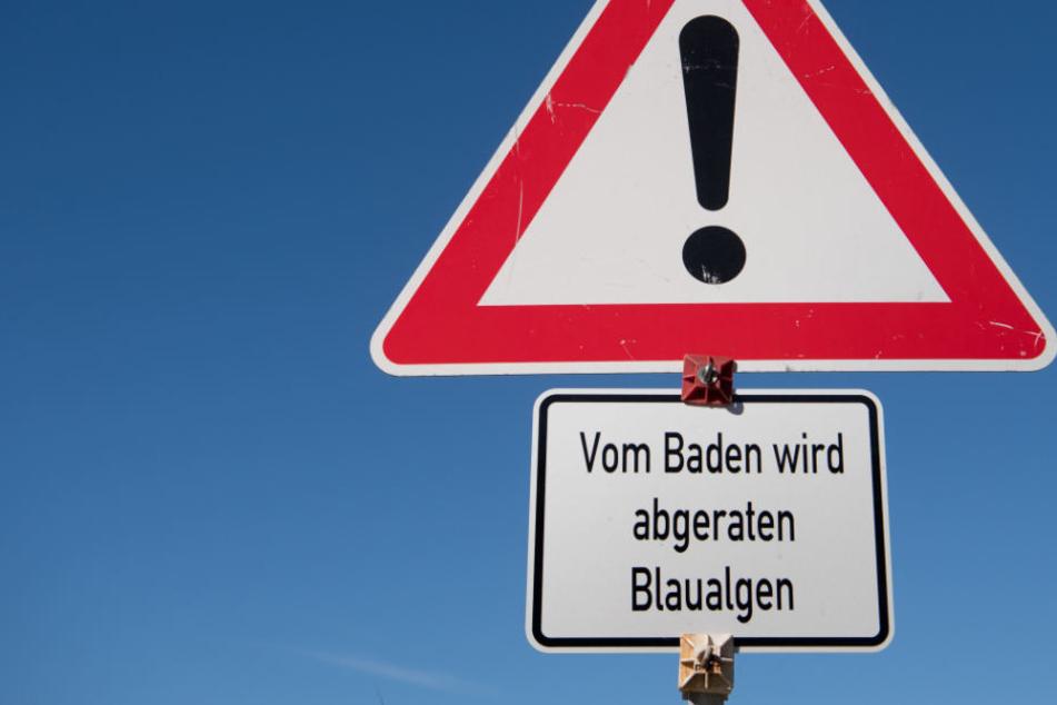 Am Montag wird sich zeigen, ob im Bagger noch geplanscht werden kann. (Symbolbild)