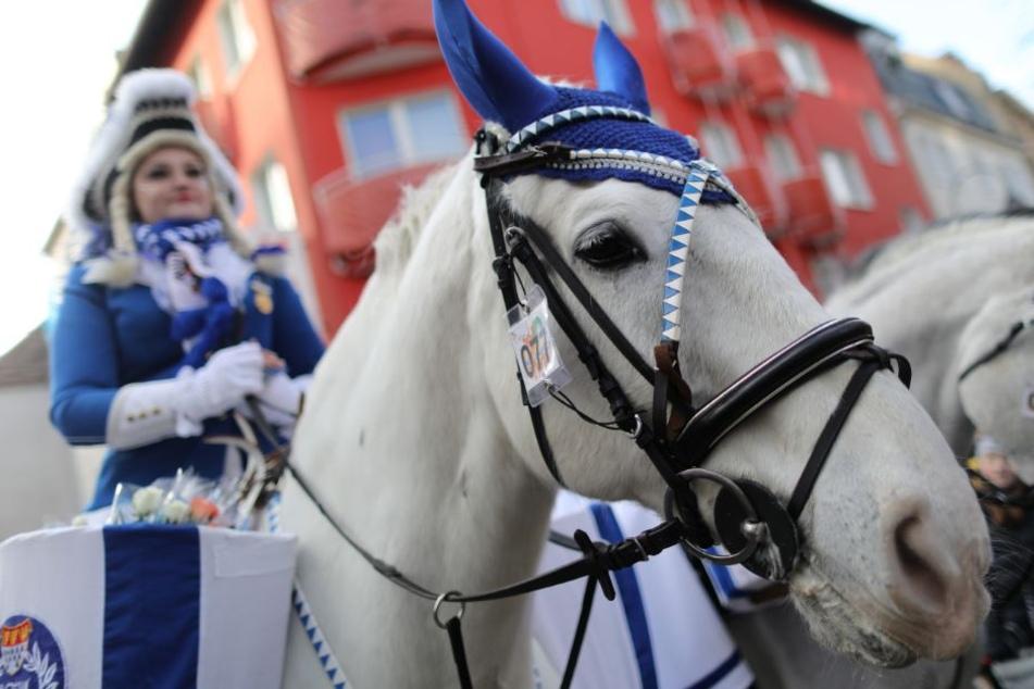 Pferde beim Rosenmontagsumzug in Köln.