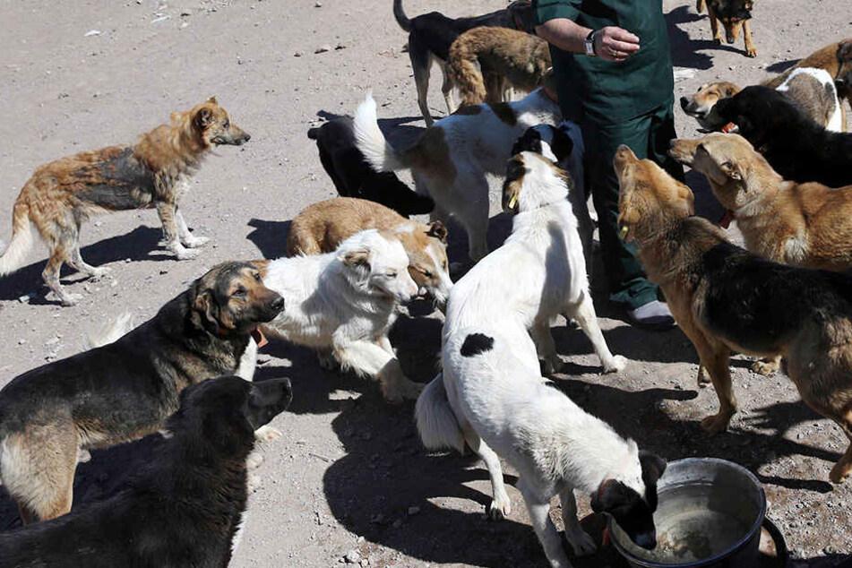 Die Hunde griffen sie in ihrer Einfahrt an. (Symbolbild)