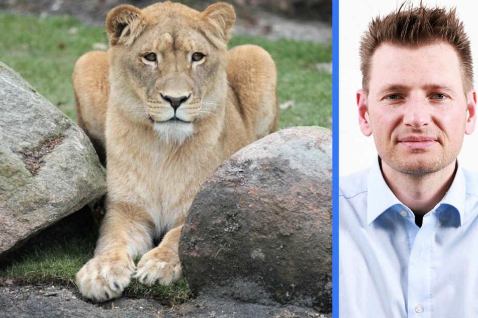 Löwin Kigali frisst ihre Babys: PETA fordert Zucht-Stopp von Zoo Leipzig