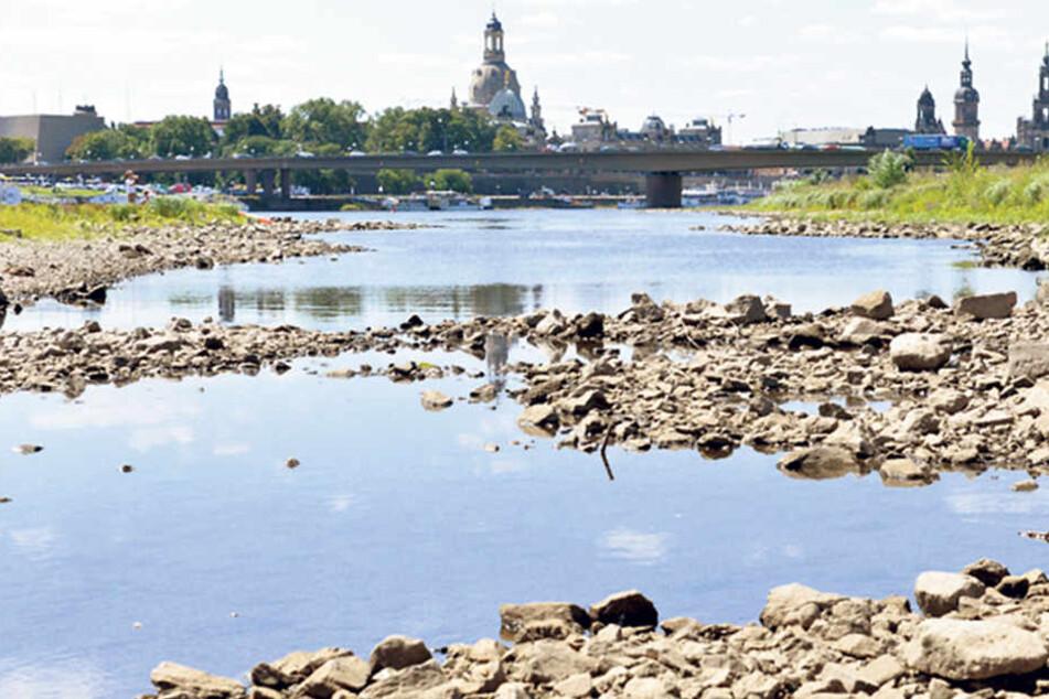 Um 70 Zentimeter dümpelte der Pegel der Elbe gestern in Dresden.