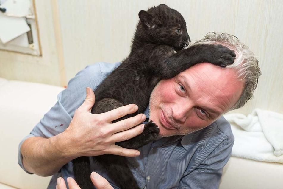 """""""Berufspendler"""": Dieses Panther-Baby geht weite Wege!"""