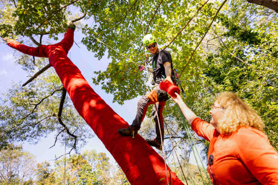 """Penelope Richardson, australische Künstlerin (r.), reicht während des Aufbaus des Kunstprojekts """"Die Bäume zum Himmel"""" einem Baumpfleger eine Kordel mit rotem Stoff."""