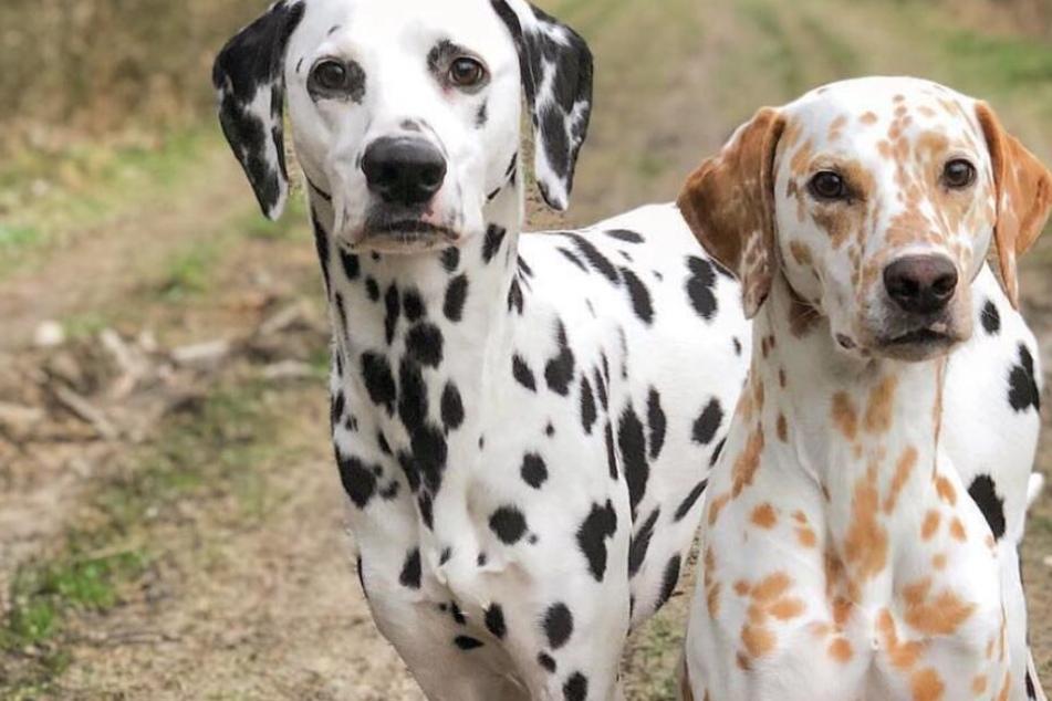 Khalessi und Django sind ziemlich beste Hunde-Freunde.