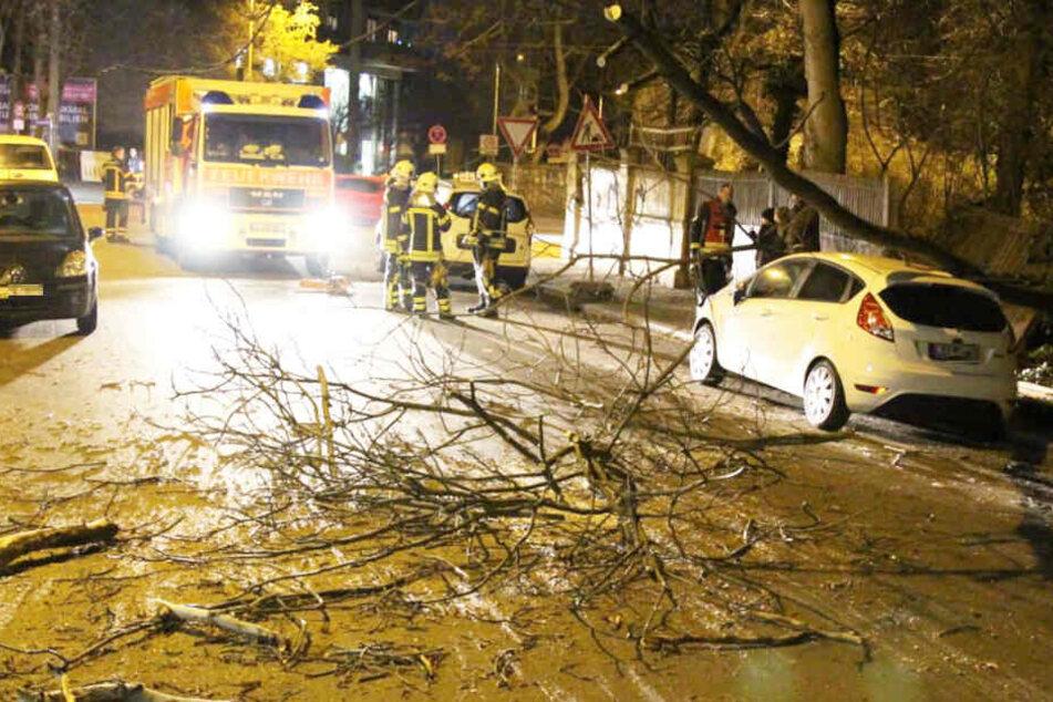 Vorher durchbrach der Baum noch einen Zaun, ehe er auf dem Auto landete.
