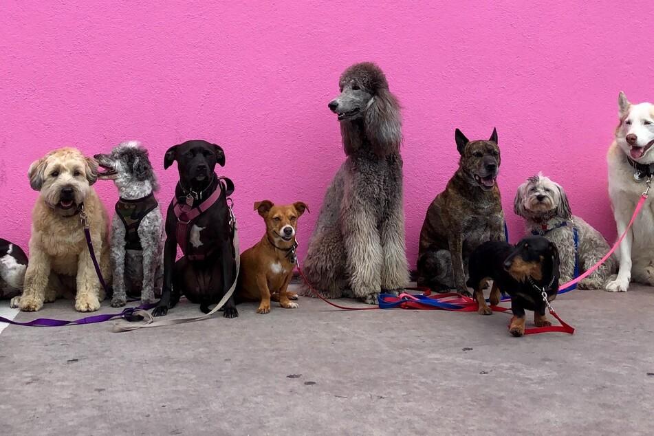 Hunde sind erstaunliche Tiere – 5 verblüffende Exemplare hat TAG24 in den weltweiten Hunderekorden zusammengefasst (Symbolbild).