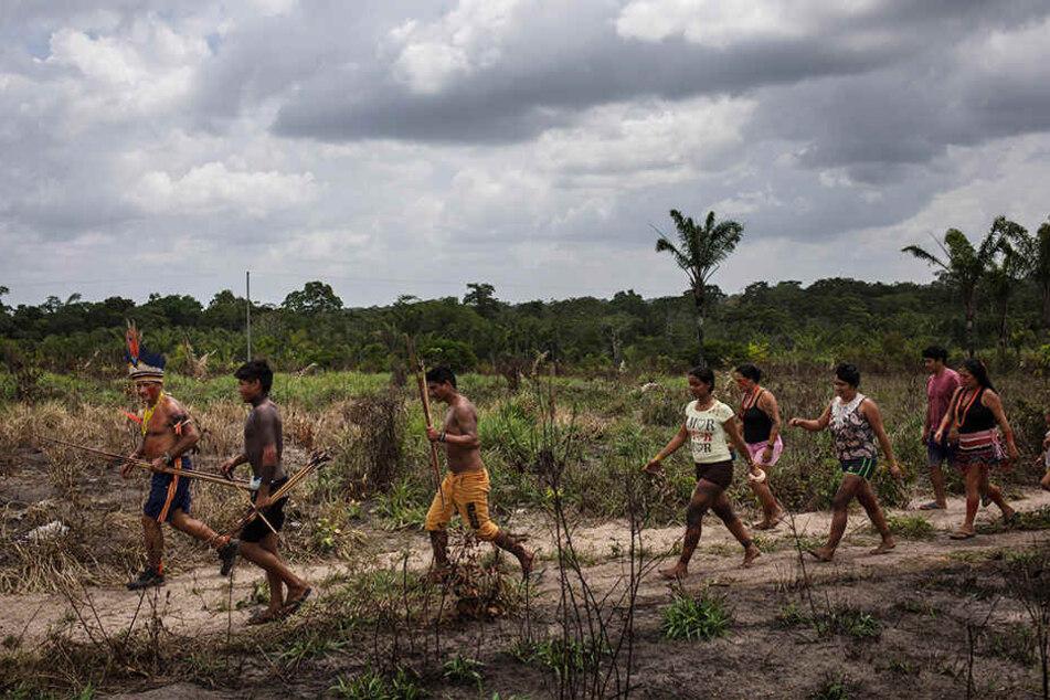 Der Stamm der Tembé-Indianer versammelt sich im indigenen Reservat Alto Rio Guama im Bundesstaat Para, um einen Plan zu entwickeln, wie Holzfäller und Eindringlinge in Schach gehalten werden sollen.