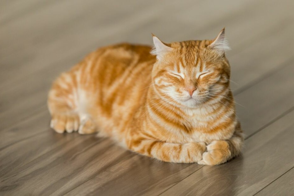 Katzenhaltung in der Mietwohnung: Geht das?
