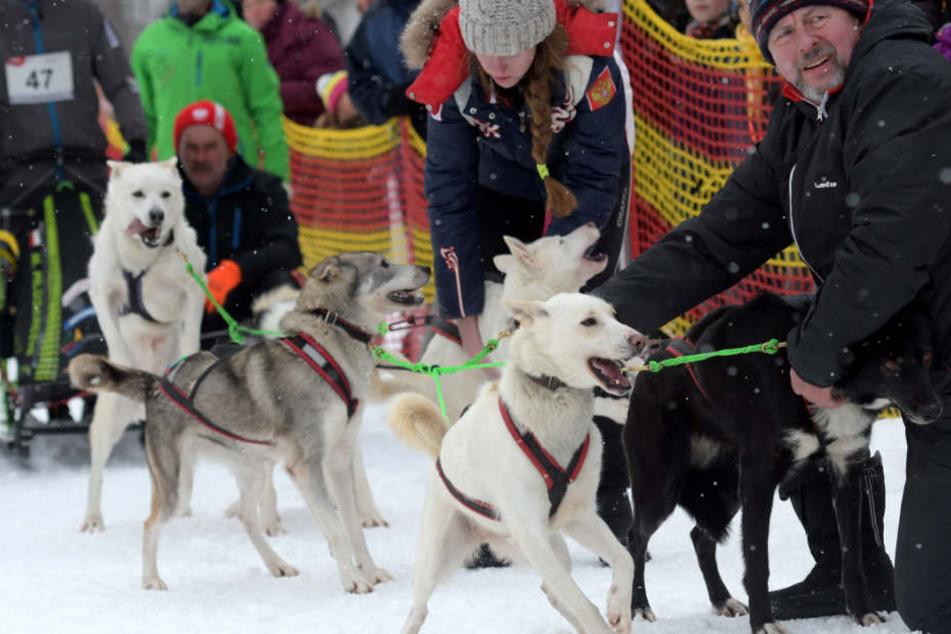 Das internationale Hundeschlittenrennen am vergangenen Sonntag in Bad Hindelang (Foto) konnte noch ausgetragen werden.