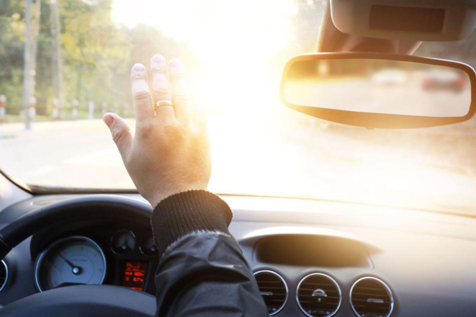 Vom Scheinwerfer geblendet, konnte der Autofahrer der kleinen Kuhherde nicht mehr rechtzeitig ausweichen. (Symbolbild)
