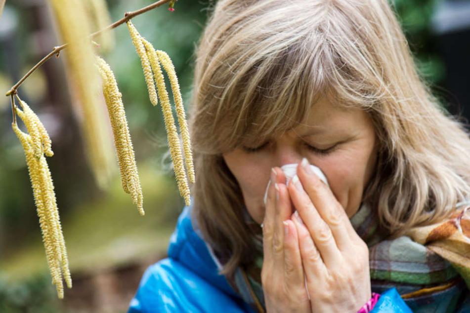 Die ersten Pollen fliegen in kleinen Mengen schon wieder durch die Luft. (Symbolbild)