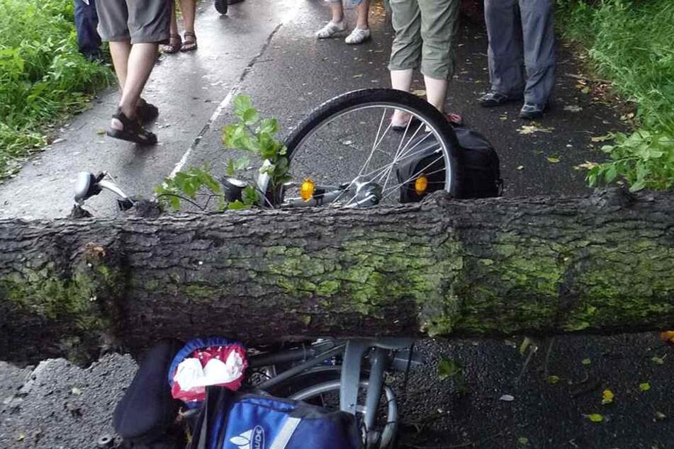Was für ein Pech musste dieser Radfahrer haben? Mittig wurde sein Rad von einem Baum getroffen.
