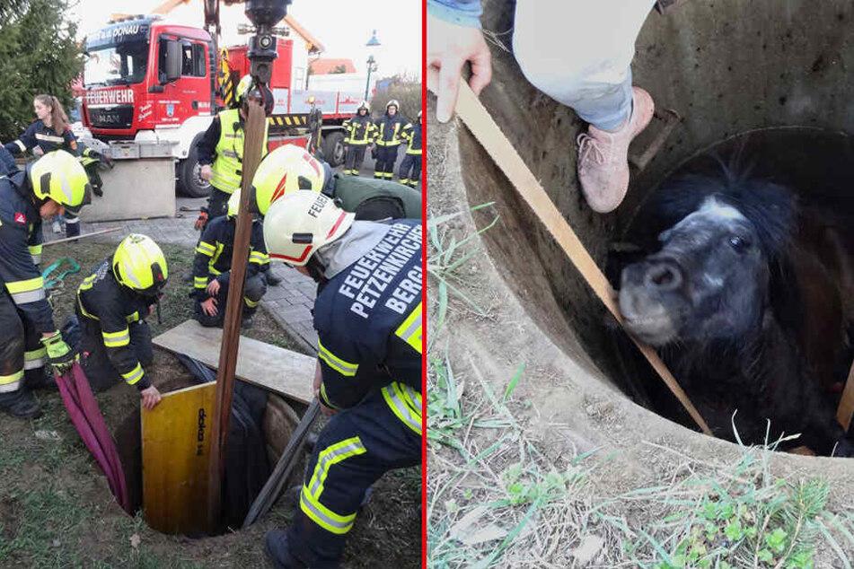 Unglaublich, was für ein Tier die Feuerwehr aus einem Schacht befreien muss