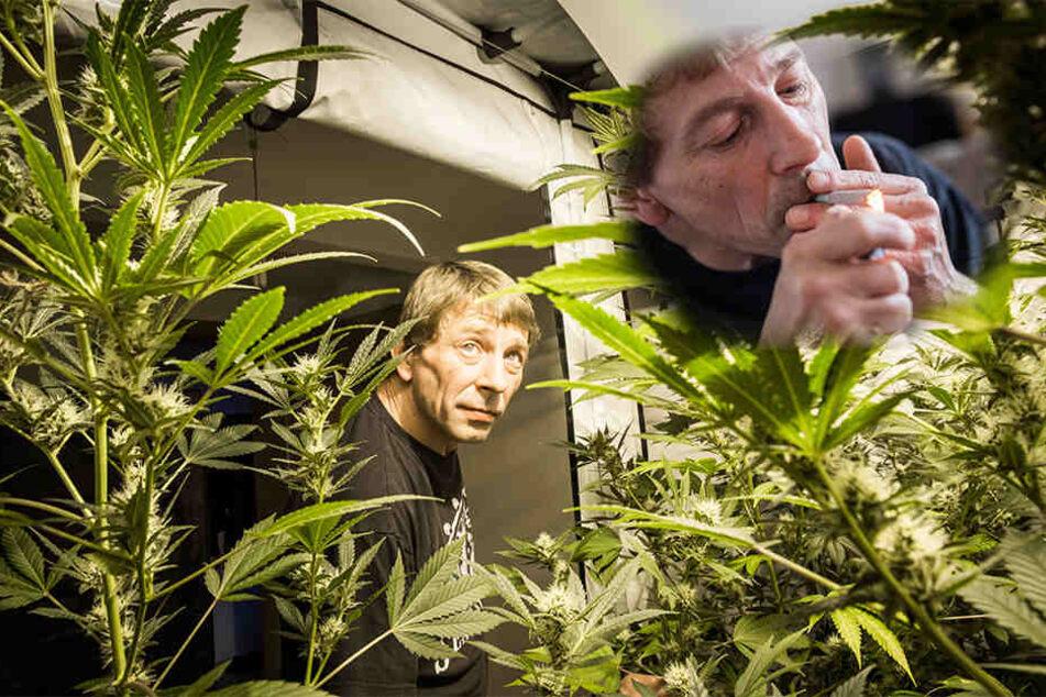 Dieser Mann baut Cannabis Zuhause an und der Staat erlaubt es