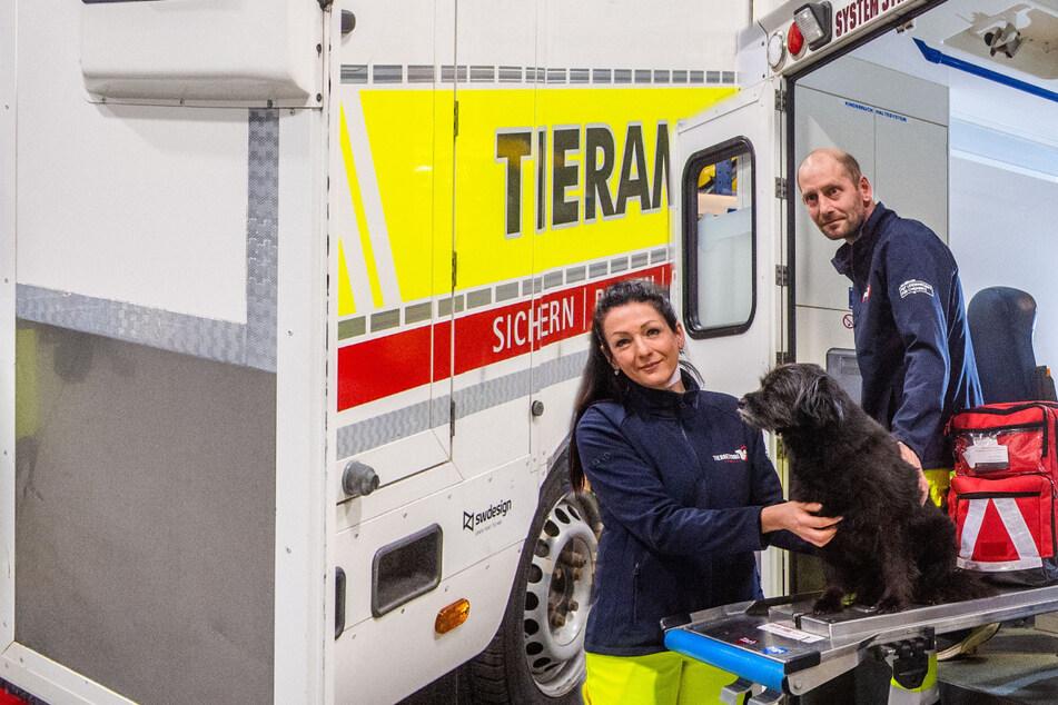 Aus Chemnitz nicht mehr wegzudenken: Tierrettung war schon Hunderte Male im Einsatz