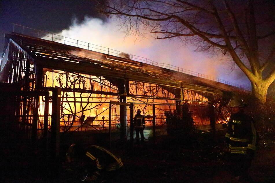 Ein Jahr nach Brand im Affenhaus: Strafverfahren in Krefeld beendet