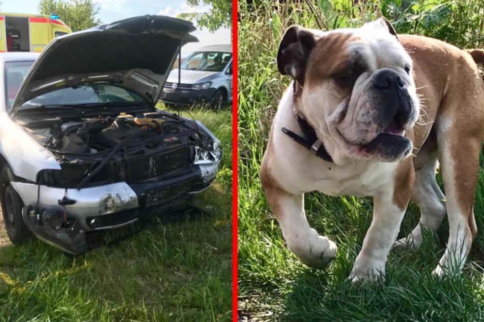 Nach dem Schock des Unfalls auch das noch: Der Hund musste ohne seine Familie am Autowrack warten!