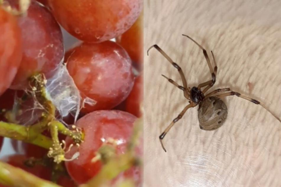 Frau findet tödliche Spinne in ihrer Weintrauben-Packung