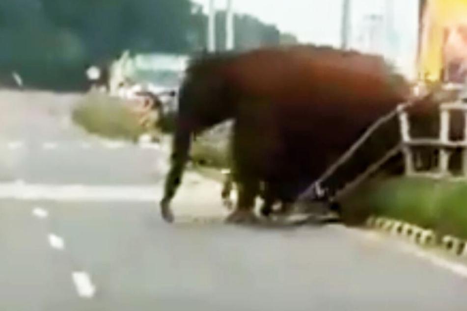 Autobahn dicht, weil Elefanten spazieren gehen!