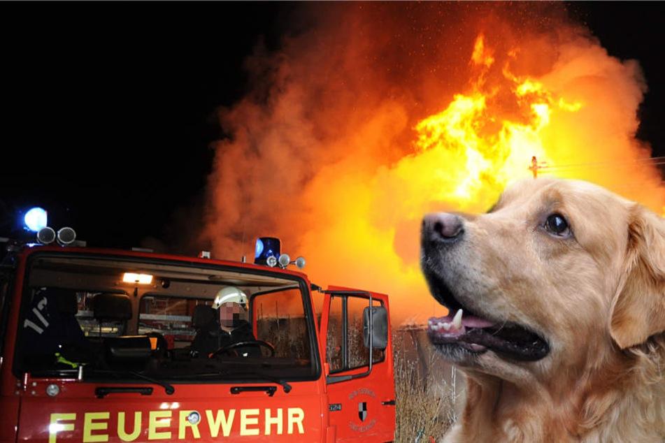 Ein Hund kam bei dem Feuer ums Leben (Symbolbild).