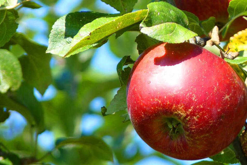 Obst und Gemüse für alle aus der Bielefelder City?