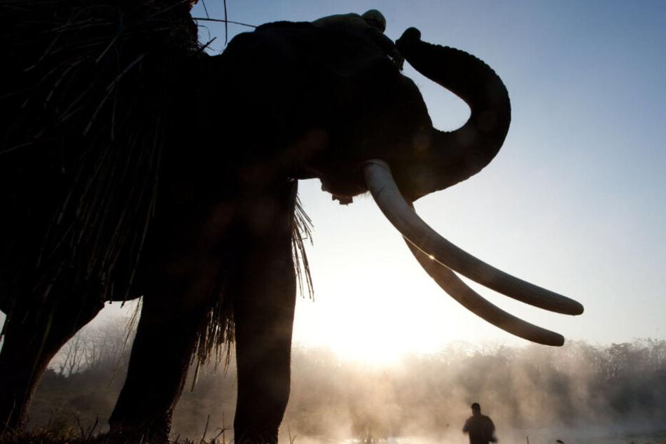 Elefanten sind in Nepal häufig auch eine Touristenattraktion.