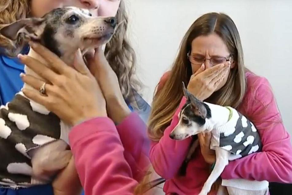 Verschwundener Hund taucht nach 12 Jahren wieder auf!
