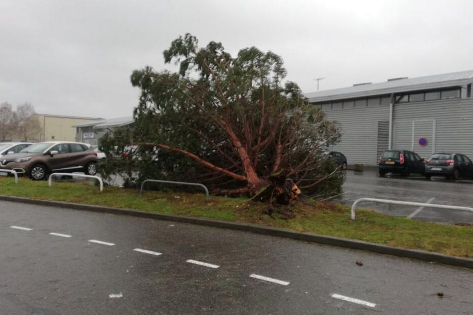 Ein umgestürzter Baum liegt auf dem Parkplatz des Flughafens Pau-Pyrenäen.