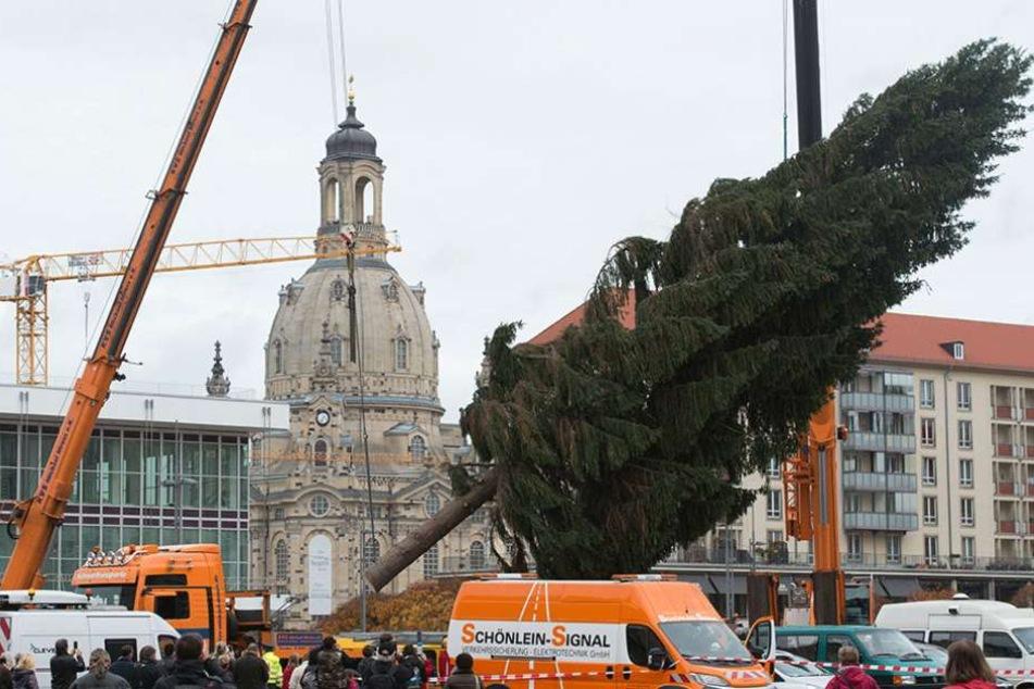 Mit zwei Kränen wurde der 20 Meter hohe Baum aufgerichtet.
