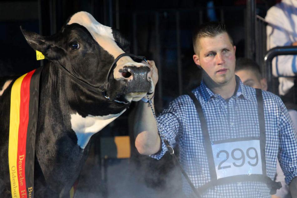 """Trauer um """"Lady Gaga"""": Deutschlands schönste Kuh ist tot!"""