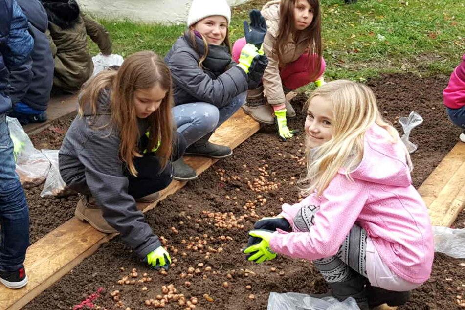 Die fleißigen Hortkinder der Schillerschule pflanzten die Blumenzwiebeln, weil sie auch zukünftig in einem bunten Stadtteil leben möchten.