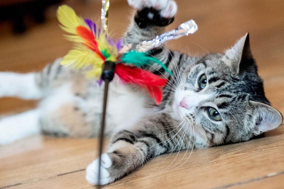 Sächsin kauft Katze, plötzlich werden die Verkäufer brutal