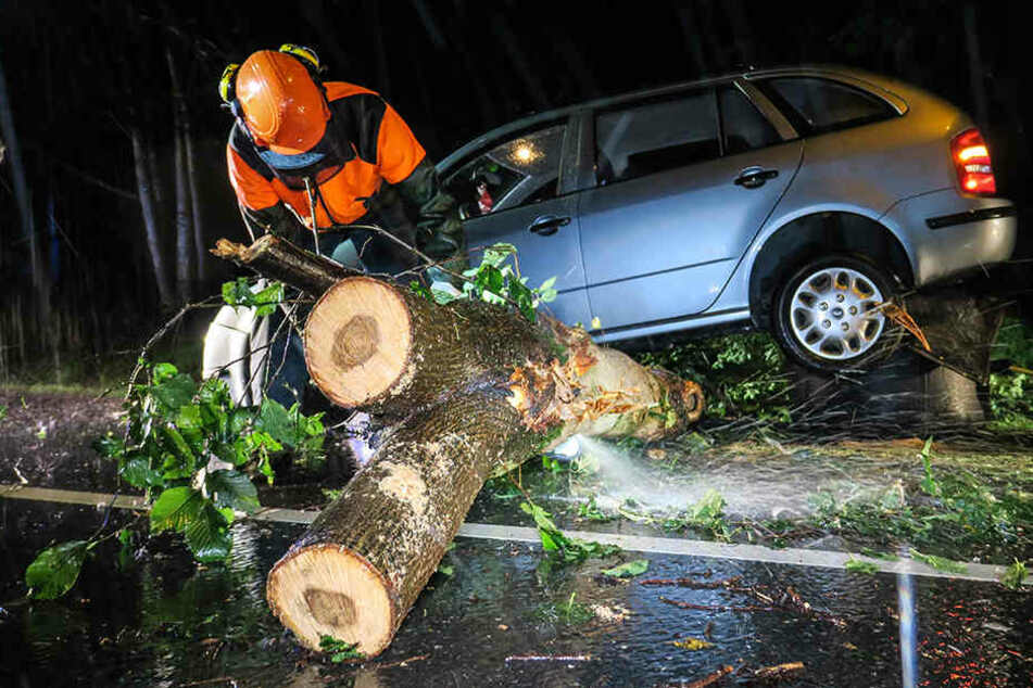Unwetter-Crash! Skoda kracht in umgestürzten Baum