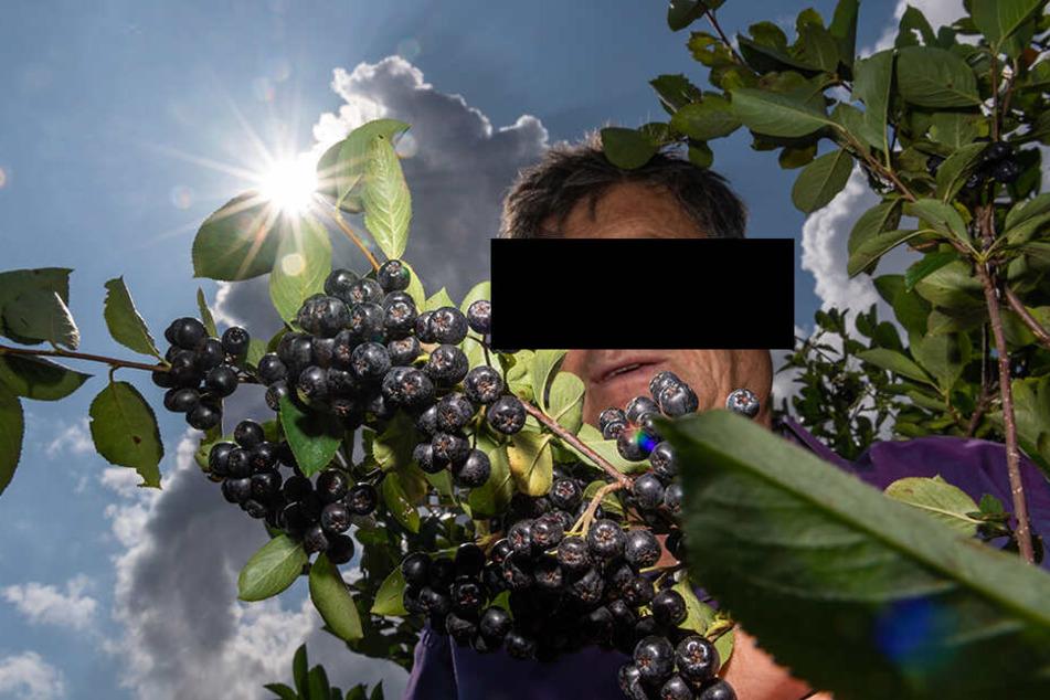 Jörg H. auf seiner Plantage. Er baut dort Aronia-Beeren an, die als besonders gesundheitsfördernd gelten.