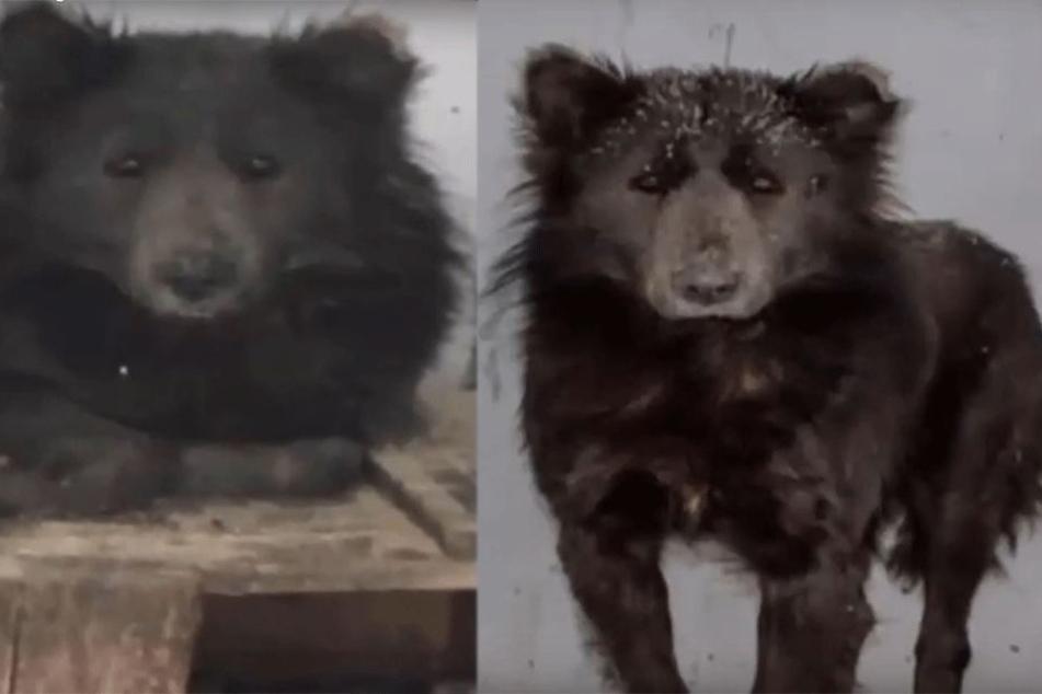 Mysteriöses Mischwesen aus Hund und Bär aufgetaucht