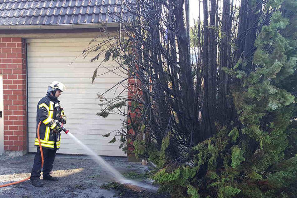 Die Feuerwehr aus Lage musste lediglich Nachlöscharbeiten durchführen.