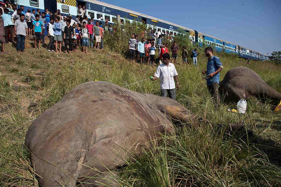 Schaulustige betrachten zwei tote Elefanten, die in der Nähe von Guwahati (Indien) neben einem Bahngleis liegen.