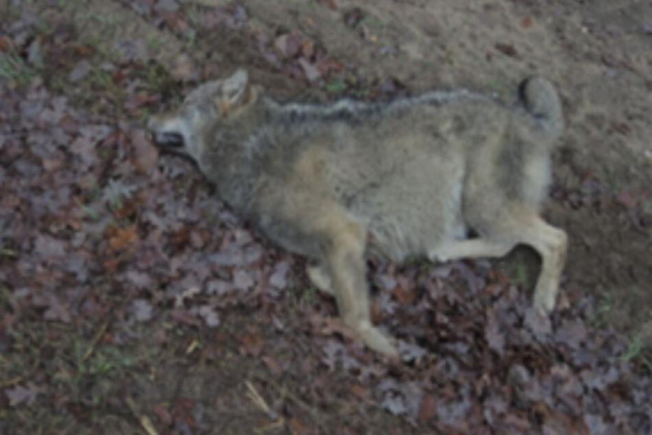 Das Tier verendete im Straßengraben.