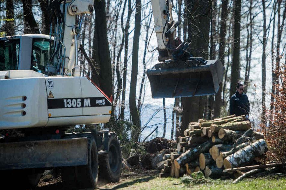 Die Polizei gräbt auch weiterhin in einem Waldstück nach der Leiche der vermissten Schülerin.