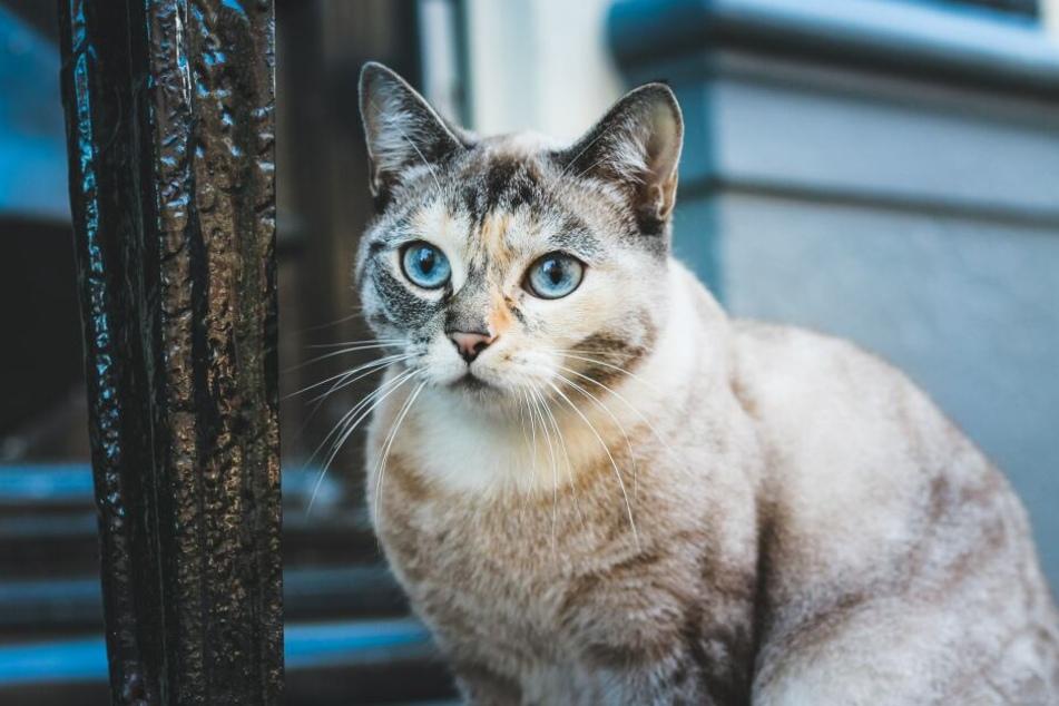 Was sollte eine gesunde Katze wiegen?