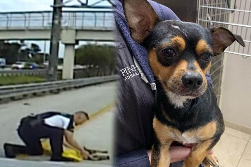 Polizist rettet geistesgegenwärtig kleinen Hund auf Autobahn