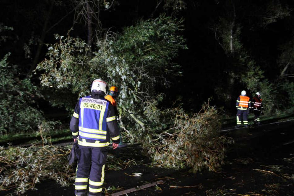 Umgestürzte Bäume: Die Feuerwehr hatte in der Nacht jede Menge zu tun.