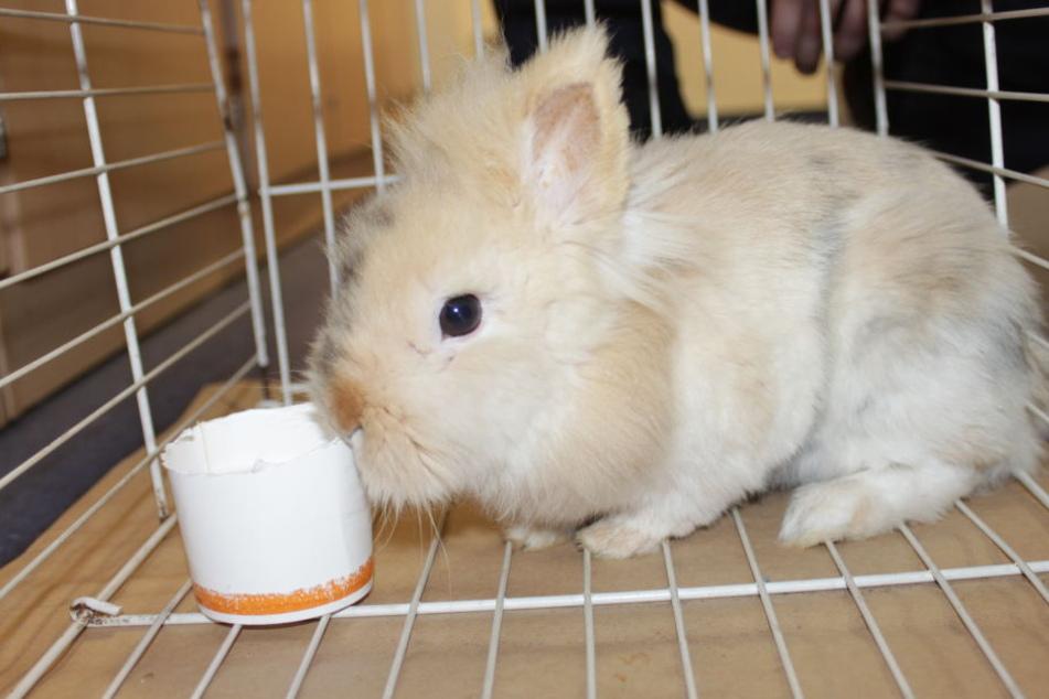 """""""Hermine"""" wurde das Kaninchen von den Beamten getauft."""