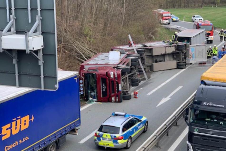 Viehtransporter kippt um: Fahrer verletzt, zahlreiche Schweine tot