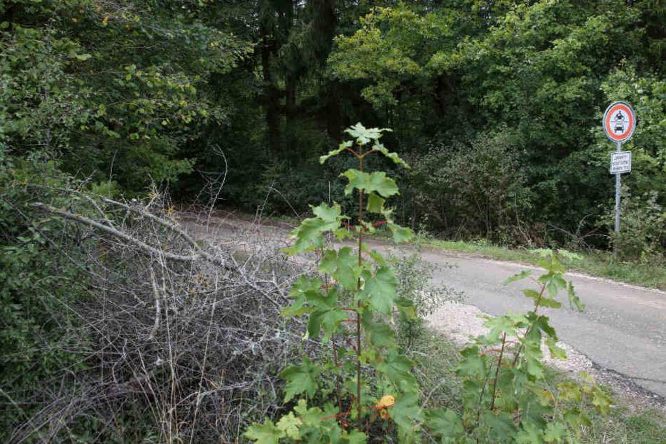 Der Leichnam war in einem Waldgebiet entlang der Landstraße 453 entdeckt worden.