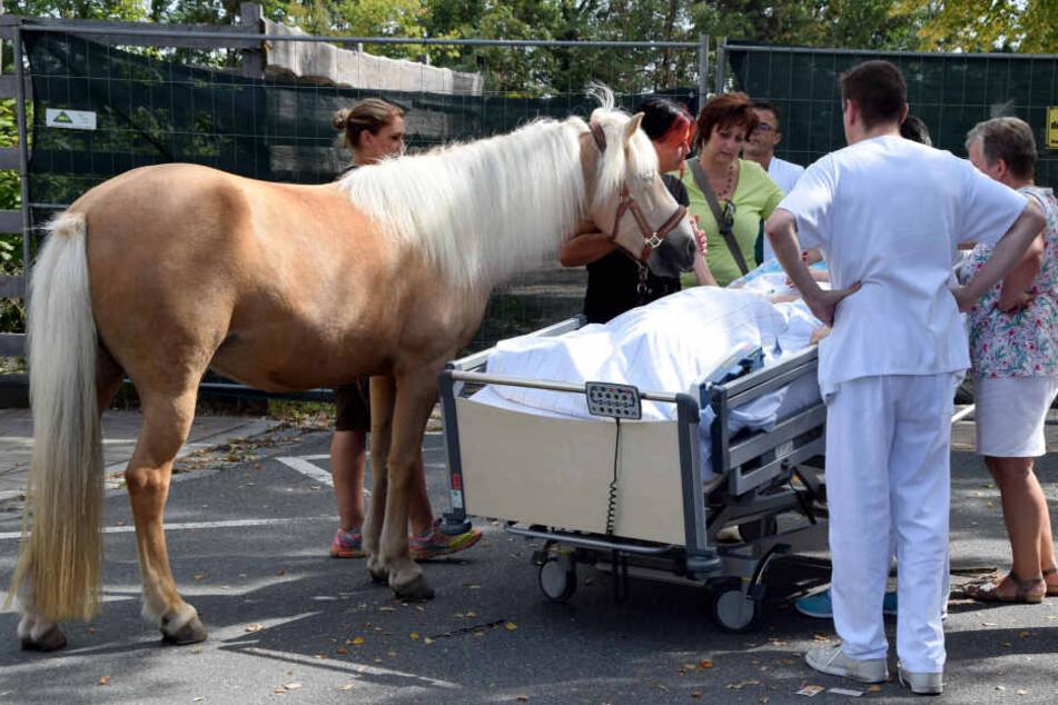 """Die Frau konnte ihr liebstes Pferd """"Dana"""" noch ein letztes Mal streicheln."""