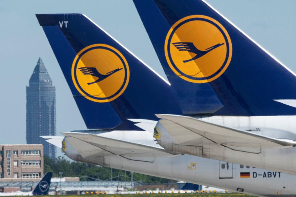 Das Foto zeigt Passagiermaschinen der Lufthansa auf dem Vorfeld des Flughafen Frankfurt.