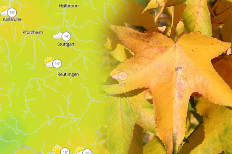 Bunte Blätter im Sonnenschein oder Grauer Regenhimmel? So wird das Wetter