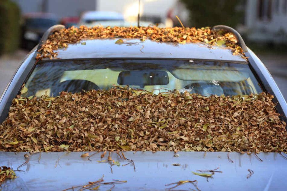 Mit Herbstblättern bedeckt ist die Windschutzscheibe eines parkenden Autos.